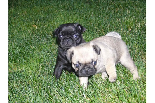 tierinserate hunde
